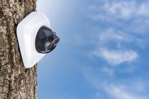Digital CCTV camera on the oak tree trunk with blue sky